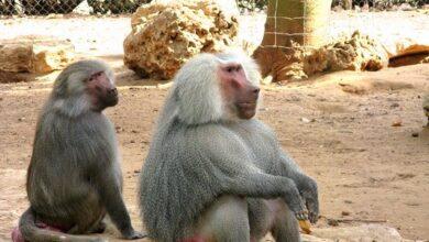 Photo of مدرسة النجاح تنظم رحلة لطلابها الى حديقة الحيوانات  والسفاري في رمات غان.